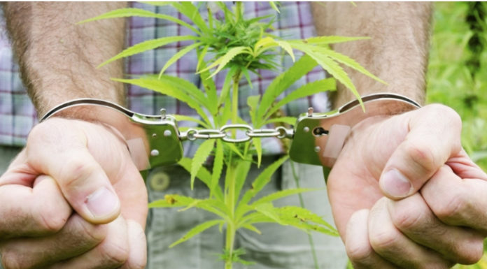 Marijuana Program washington d.c. dismisses convictions