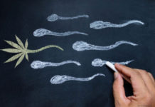 Cannabis increases men sperm count